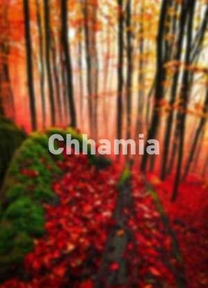 Chhamia