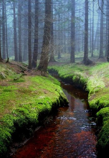 茂密的森林图片