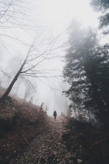 雾天的森林图片
