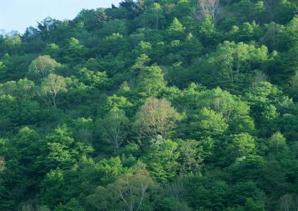 浓密的森林图片