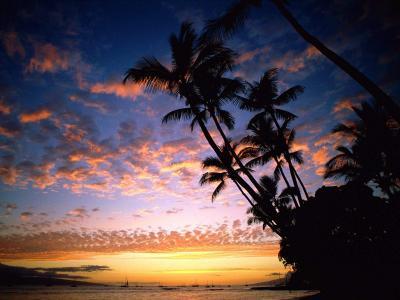 椰树晚霞图片